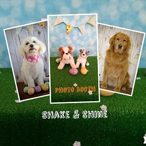 Shake shine home dogs in the photobooth solutioingenieria Choice Image